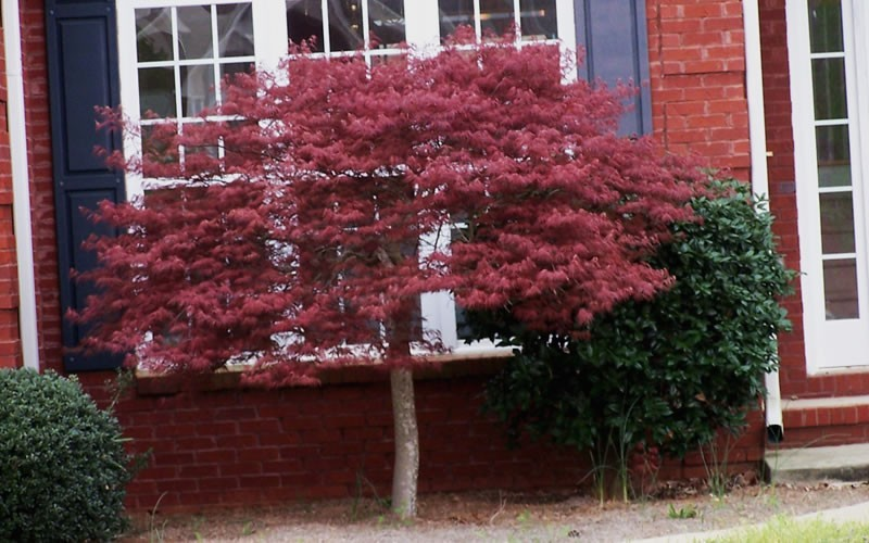 Landscaping 101 for Small trees for corner of house