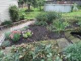 Garden Update: I've neglected myflowers